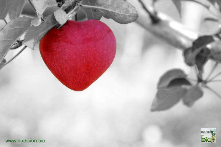 Hemocromatosis Consejos de Nutrición